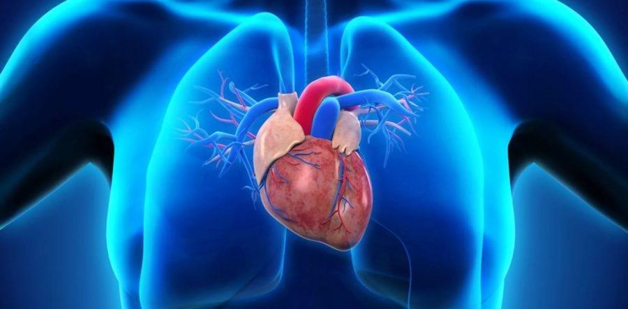 Лікування серцево-судинної системи