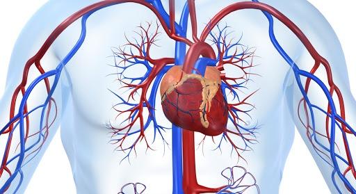 Сhoroby kardiologiczne